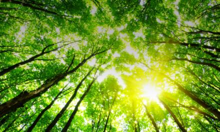 La Strategia UE sul Metano offre il quadro per Azione Climatica Immediata